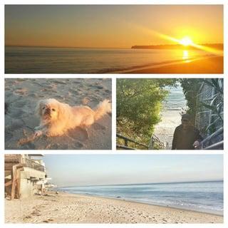 Dog_Beach.jpg