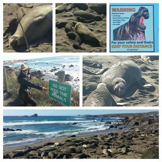 Elephant_Seals_Funny.jpg