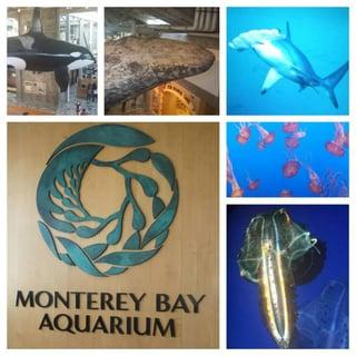aquarium_fun.jpg