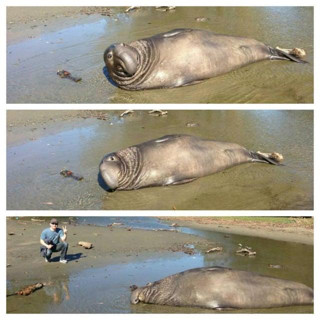 elephant_seals.jpg