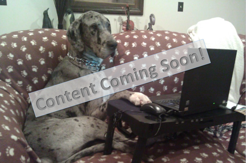 Funny Great Dane Pictures